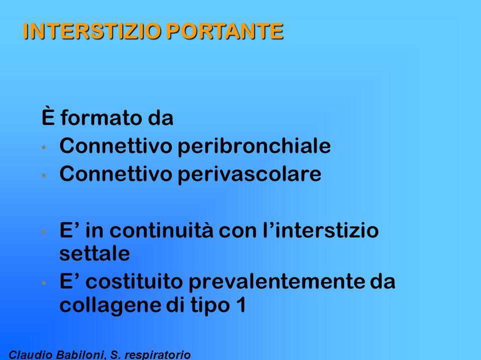 Claudio Babiloni, S. respiratorio INTERSTIZIO PORTANTE È formato da Connettivo peribronchiale Connettivo perivascolare E' in continuità con l'intersti