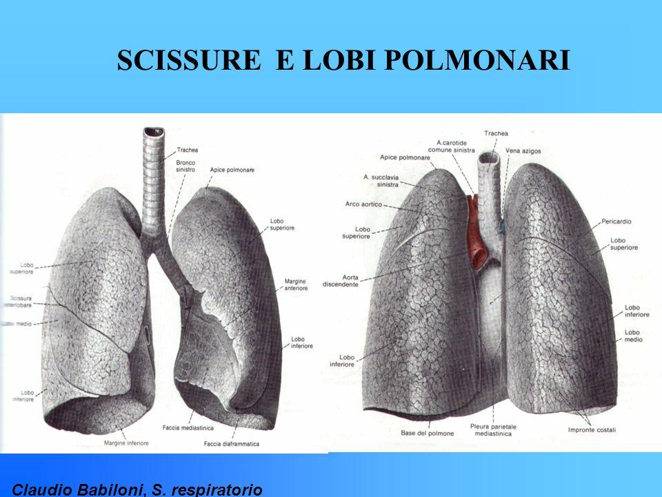 Claudio Babiloni, S. respiratorio SCISSURE E LOBI POLMONARI