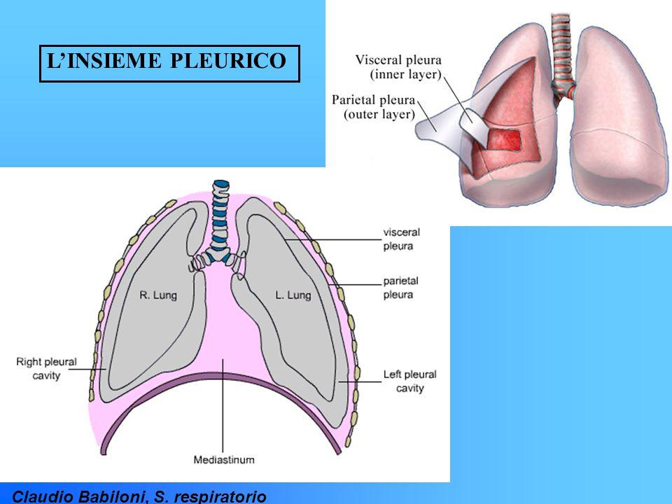 Claudio Babiloni, S. respiratorio L'INSIEME PLEURICO