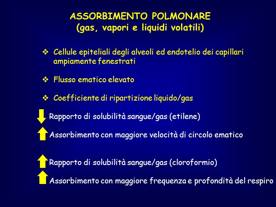 ASSORBIMENTO POLMONARE (gas, vapori e liquidi volatili)  Cellule epiteliali degli alveoli ed endotelio dei capillari ampiamente fenestrati  Flusso e