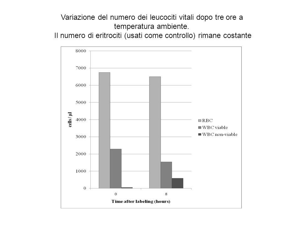 Variazione del numero dei leucociti vitali dopo tre ore a temperatura ambiente. Il numero di eritrociti (usati come controllo) rimane costante