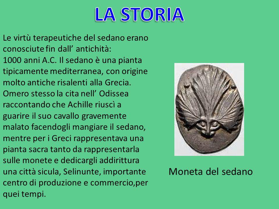 Le virtù terapeutiche del sedano erano conosciute fin dall' antichità: 1000 anni A.C. Il sedano è una pianta tipicamente mediterranea, con origine mol