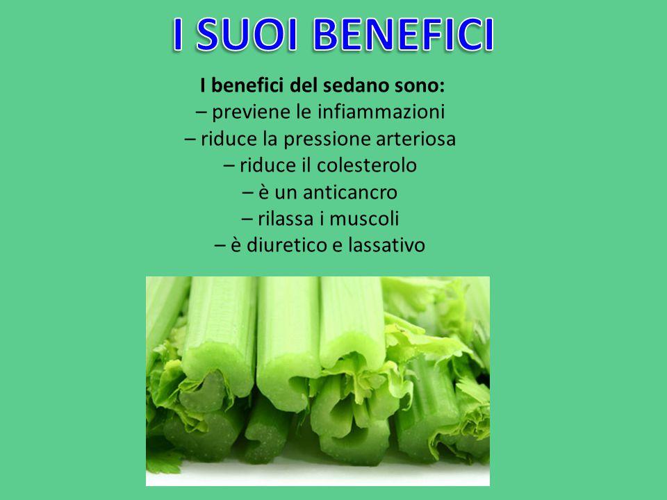 I benefici del sedano sono: – previene le infiammazioni – riduce la pressione arteriosa – riduce il colesterolo – è un anticancro – rilassa i muscoli