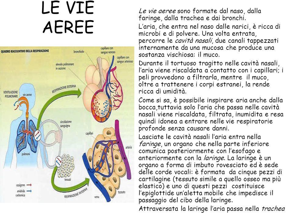 LE VIE AEREE Le vie aeree sono formate dal naso, dalla faringe, dalla trachea e dai bronchi. L'aria, che entra nel naso dalle narici, è ricca di micro