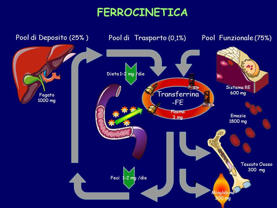 Transferrina -FE Mioglobina 300 mg Sistema RE 600 mg Fegato 1000 mg Plasma 3 mg Emazie 1800 mg Tessuto Osseo 300 mg Feci 1-2 mg /die Pool di Deposito