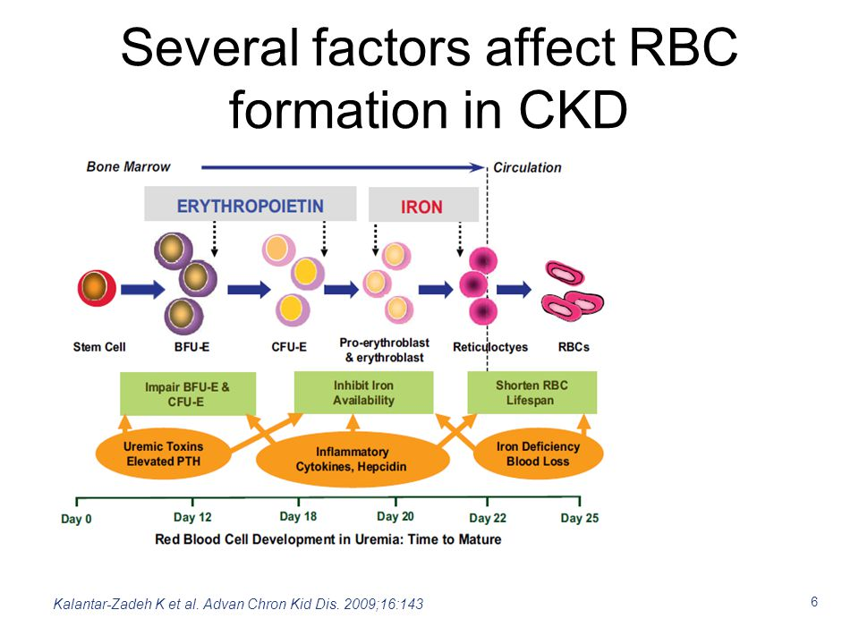 7 Anaemia in CKD is multifactorial Anaemia In CKD Blood loss Inflammation Renal insufficiency with relative deficit of EPO Drugs Appetite Absorption Needs Iron deficiency Adapted from Huch R, Schaefer R, Thieme Publishers, 2006