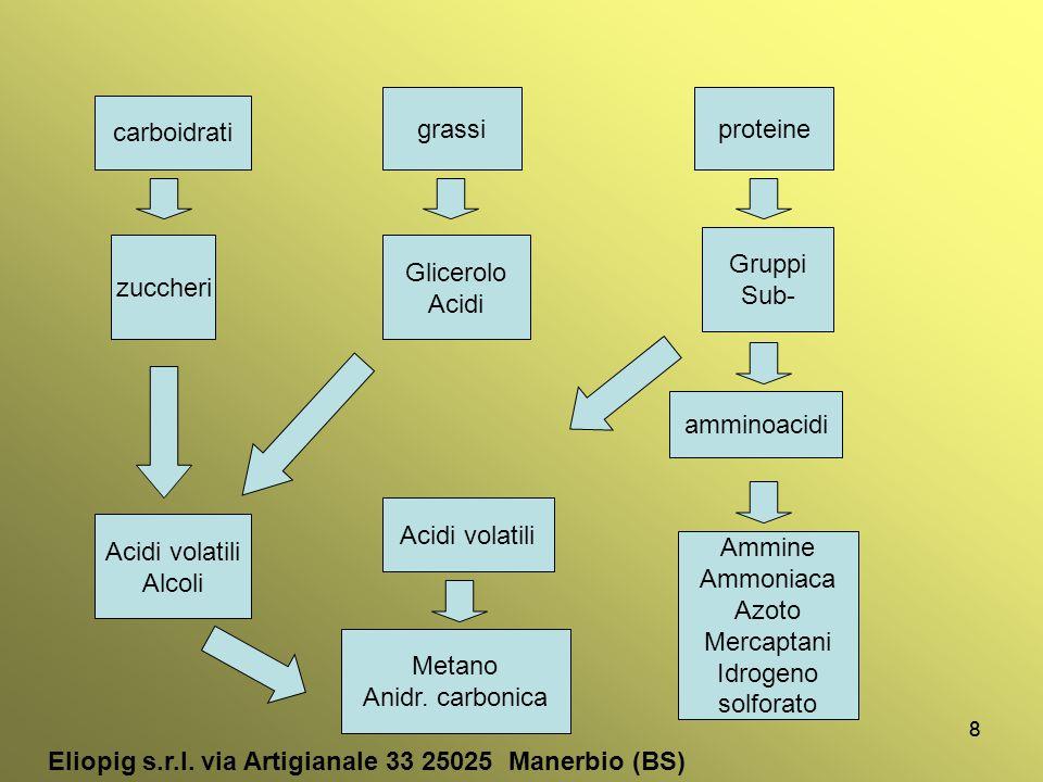 99 Batteri Metanigeni Acetoclastici utilizzano acido acetico Idrogenotrofici Utilizzano CO 2 e H 2 CH 3 COOH → CH 4 + CO 2 CO 2 + 4H 2 → CH 4 + 2H 2 O CH 4 + CO 2 + H 2 O (65-90% v/v ) Eliopig s.r.l.