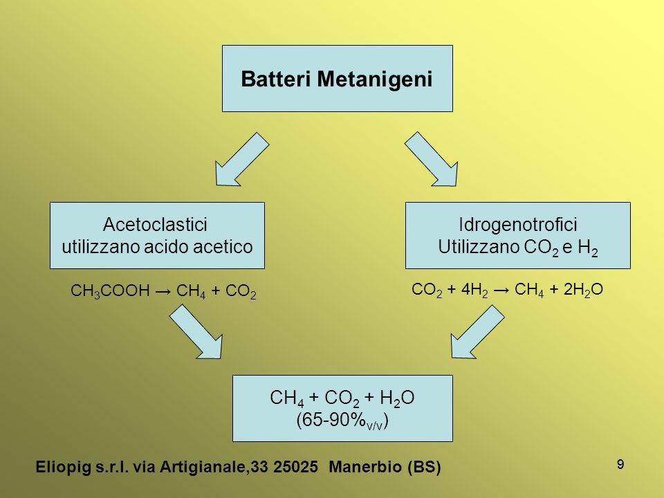 99 Batteri Metanigeni Acetoclastici utilizzano acido acetico Idrogenotrofici Utilizzano CO 2 e H 2 CH 3 COOH → CH 4 + CO 2 CO 2 + 4H 2 → CH 4 + 2H 2 O