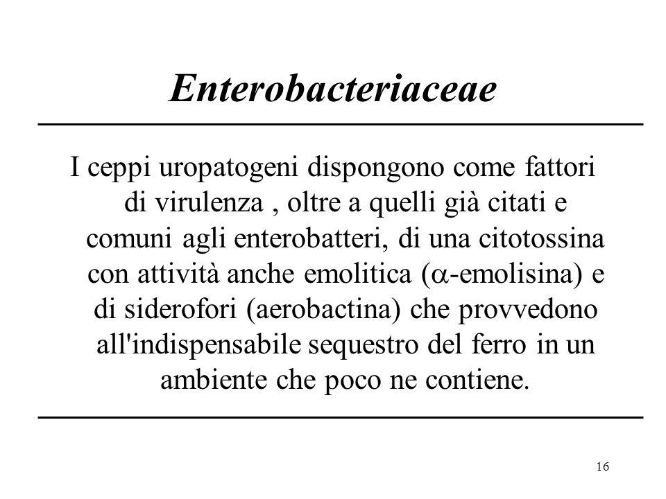 16 Enterobacteriaceae I ceppi uropatogeni dispongono come fattori di virulenza, oltre a quelli già citati e comuni agli enterobatteri, di una citotossina con attività anche emolitica (  -emolisina) e di siderofori (aerobactina) che provvedono all indispensabile sequestro del ferro in un ambiente che poco ne contiene.