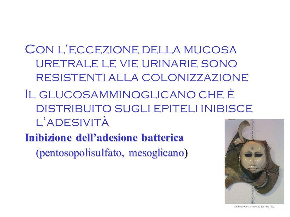 5 Con l'eccezione della mucosa uretrale le vie urinarie sono resistenti alla colonizzazione Il glucosamminoglicano che è distribuito sugli epiteli inibisce l'adesività Inibizione dell'adesione batterica (pentosopolisulfato, mesoglicano) (pentosopolisulfato, mesoglicano)