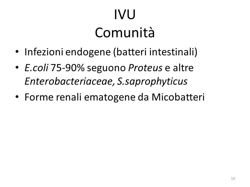 56 IVU Comunità Infezioni endogene (batteri intestinali) E.coli 75-90% seguono Proteus e altre Enterobacteriaceae, S.saprophyticus Forme renali ematogene da Micobatteri