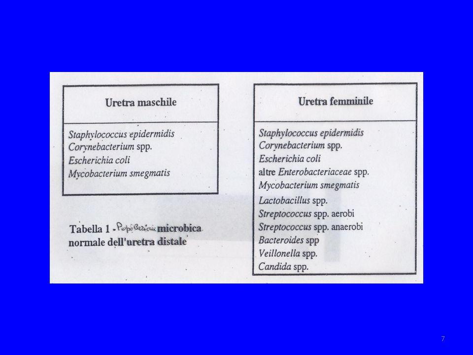 8 IVU modalità di arrivo dei germi Via ascendente o uretrale (m.i.