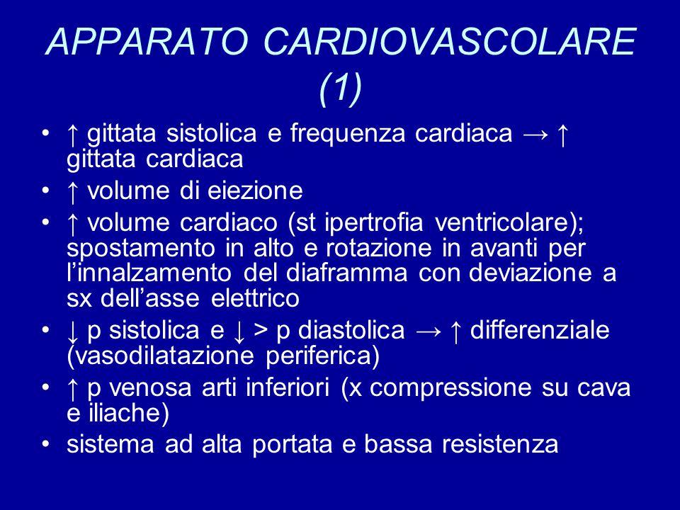 APPARATO CARDIOVASCOLARE (1) ↑ gittata sistolica e frequenza cardiaca → ↑ gittata cardiaca ↑ volume di eiezione ↑ volume cardiaco (st ipertrofia ventricolare); spostamento in alto e rotazione in avanti per l'innalzamento del diaframma con deviazione a sx dell'asse elettrico ↓ p sistolica e ↓ > p diastolica → ↑ differenziale (vasodilatazione periferica) ↑ p venosa arti inferiori (x compressione su cava e iliache) sistema ad alta portata e bassa resistenza