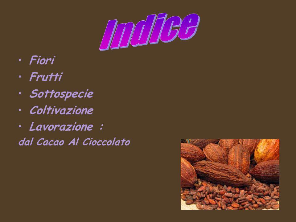 Fiori Frutti Sottospecie Coltivazione Lavorazione : dal Cacao Al Cioccolato