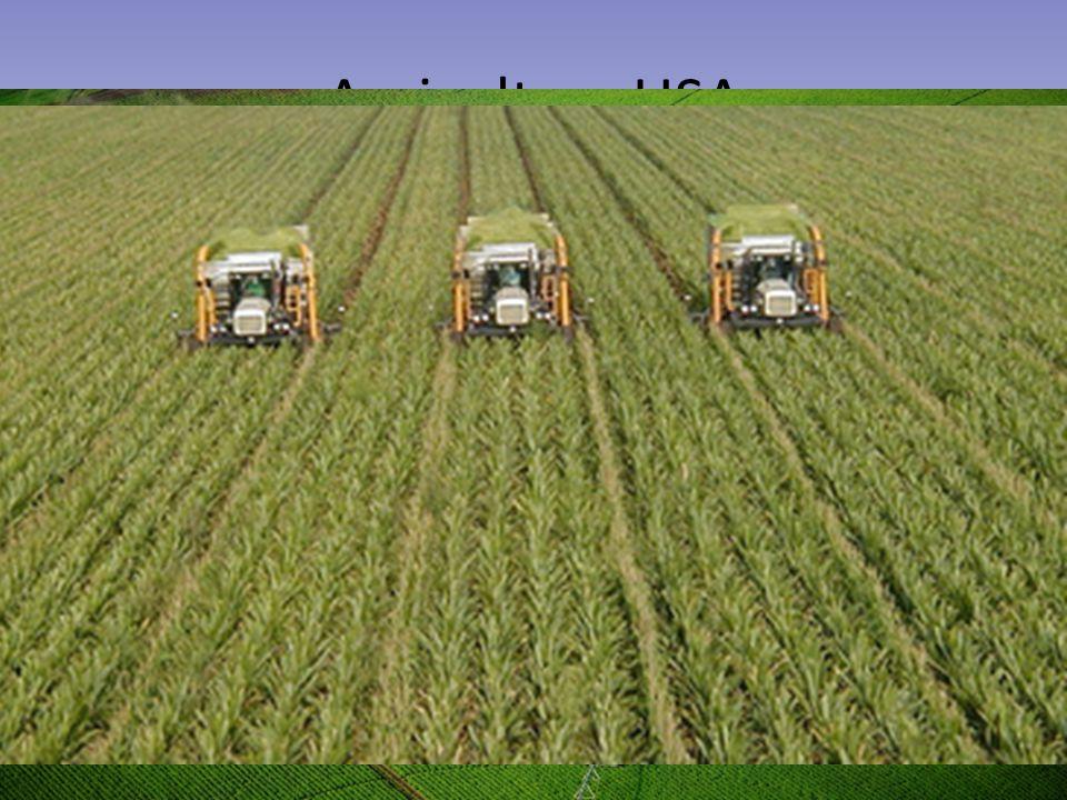 Agricoltura USA Clima e territorio adatto alle grandi coltivazioni