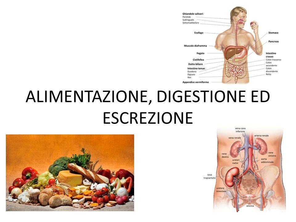MALNUTRIZIONE Con questo termine ci si riferisce ai problemi di salute causati da una dieta non appropriata o insufficiente.