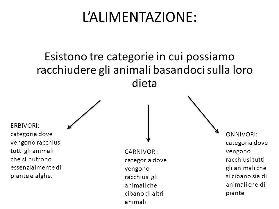 L'ALIMENTAZIONE: Esistono tre categorie in cui possiamo racchiudere gli animali basandoci sulla loro dieta ERBIVORI: categoria dove vengono racchiusi