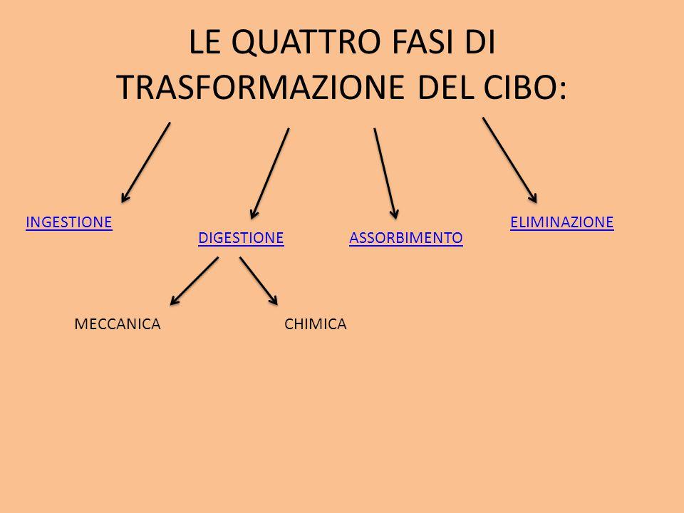 Il sistema digerente umano e l'apparato escretore: È composto da: -BOCCABOCCA -FARINGEFARINGE -ESOFAGOESOFAGO -STOMACOSTOMACO -INTESTINOINTESTINO -RENI