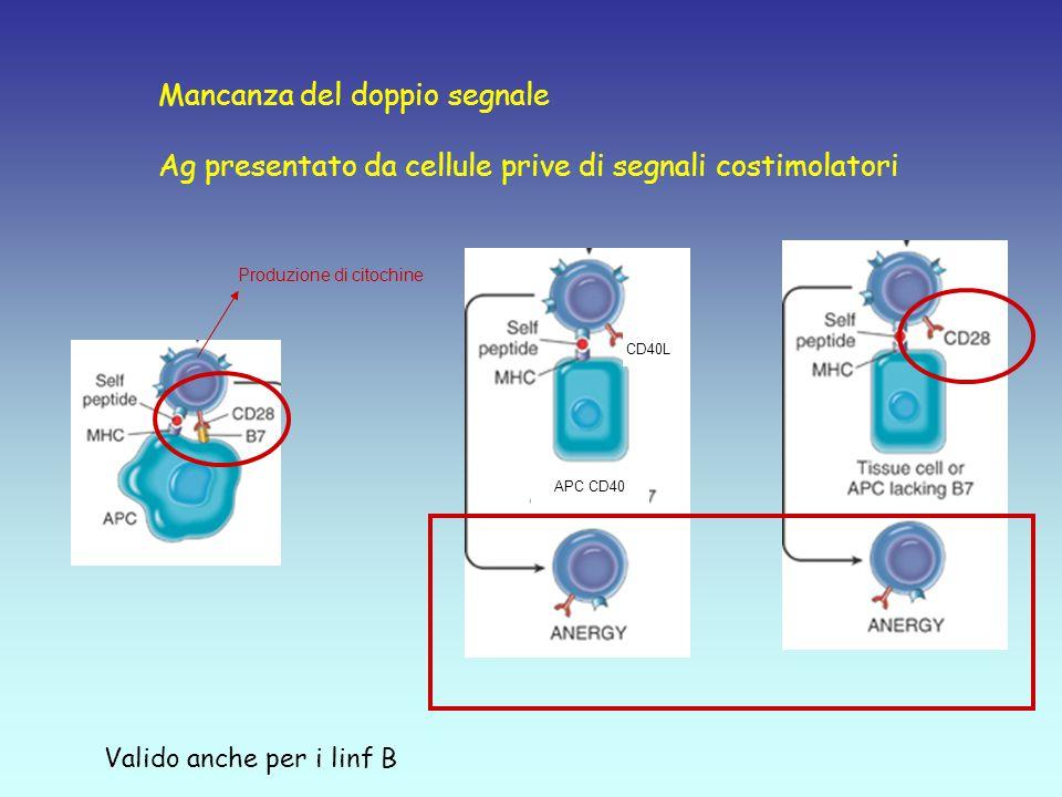 Mancanza del doppio segnale Ag presentato da cellule prive di segnali costimolatori CD40L APC CD40 Produzione di citochine Valido anche per i linf B