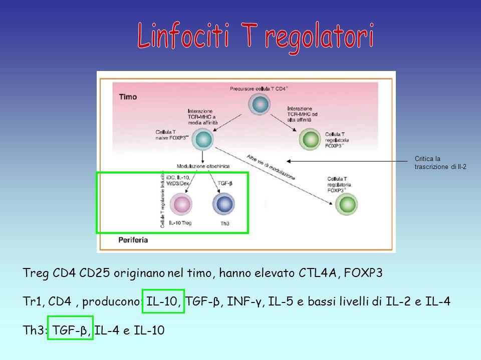Treg CD4 CD25 originano nel timo, hanno elevato CTL4A, FOXP3 Tr1, CD4, producono: IL-10, TGF-β, INF-γ, IL-5 e bassi livelli di IL-2 e IL-4 Th3: TGF-β, IL-4 e IL-10 Critica la trascrizione di Il-2