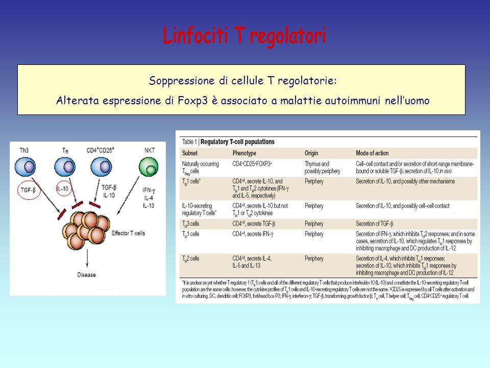 Soppressione di cellule T regolatorie: Alterata espressione di Foxp3 è associato a malattie autoimmuni nell'uomo