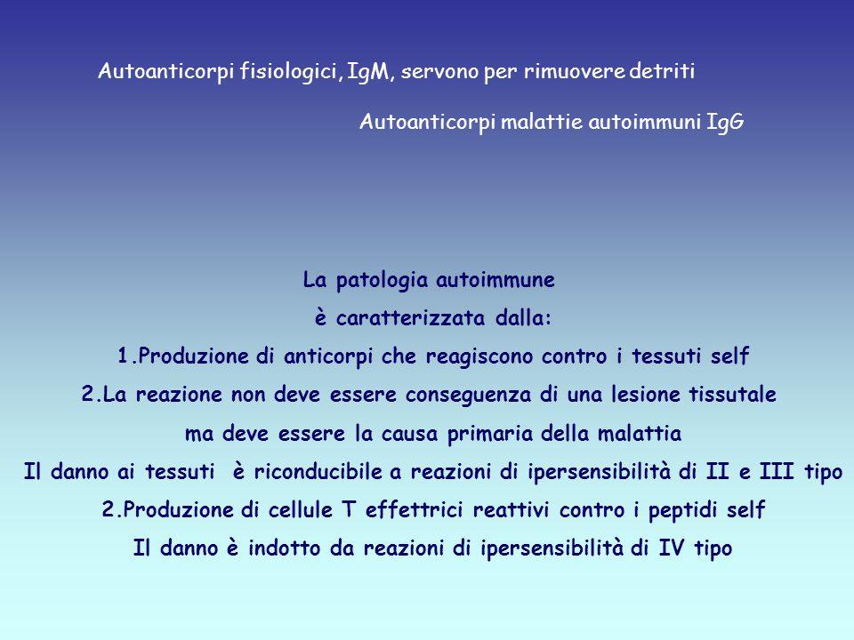 La patologia autoimmune è caratterizzata dalla: 1.Produzione di anticorpi che reagiscono contro i tessuti self 2.La reazione non deve essere conseguenza di una lesione tissutale ma deve essere la causa primaria della malattia Il danno ai tessuti è riconducibile a reazioni di ipersensibilità di II e III tipo 2.Produzione di cellule T effettrici reattivi contro i peptidi self Il danno è indotto da reazioni di ipersensibilità di IV tipo Autoanticorpi fisiologici, IgM, servono per rimuovere detriti Autoanticorpi malattie autoimmuni IgG