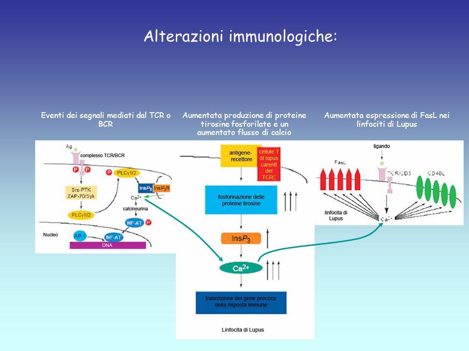 Alterazioni immunologiche: Eventi dei segnali mediati dal TCR o BCR Aumentata produzione di proteine tirosine fosforilate e un aumentato flusso di calcio Aumentata espressione di FasL nei linfociti di Lupus