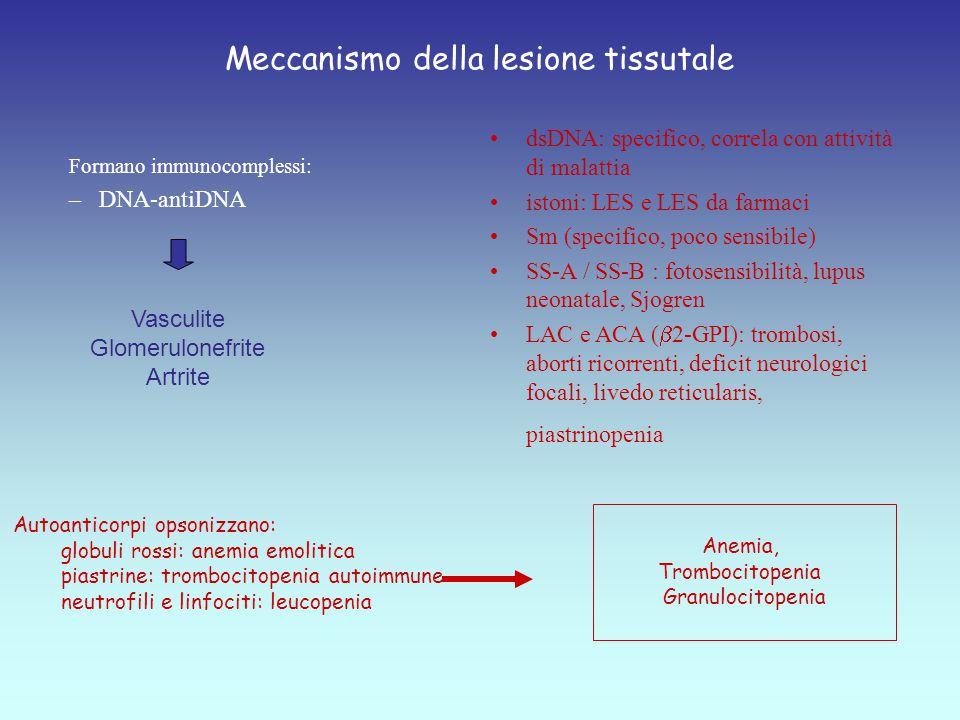 Formano immunocomplessi: –DNA-antiDNA dsDNA: specifico, correla con attività di malattia istoni: LES e LES da farmaci Sm (specifico, poco sensibile) SS-A / SS-B : fotosensibilità, lupus neonatale, Sjogren LAC e ACA (  2-GPI): trombosi, aborti ricorrenti, deficit neurologici focali, livedo reticularis, piastrinopenia Anemia, Trombocitopenia Granulocitopenia Vasculite Glomerulonefrite Artrite Autoanticorpi opsonizzano: globuli rossi: anemia emolitica piastrine: trombocitopenia autoimmune neutrofili e linfociti: leucopenia Meccanismo della lesione tissutale