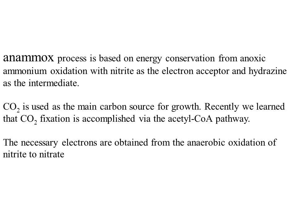 anammox process is based on energy conservation from anoxic ammonium oxidation with nitrite as the electron acceptor and hydrazine as the intermediate