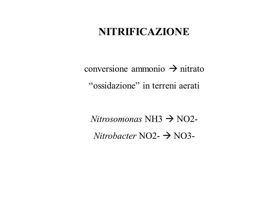"""NITRIFICAZIONE conversione ammonio  nitrato """"ossidazione"""" in terreni aerati Nitrosomonas NH3  NO2- Nitrobacter NO2-  NO3-"""