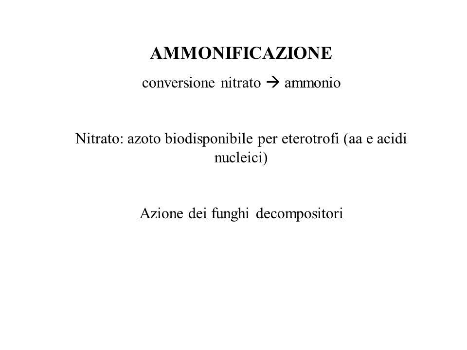 AMMONIFICAZIONE conversione nitrato  ammonio Nitrato: azoto biodisponibile per eterotrofi (aa e acidi nucleici) Azione dei funghi decompositori