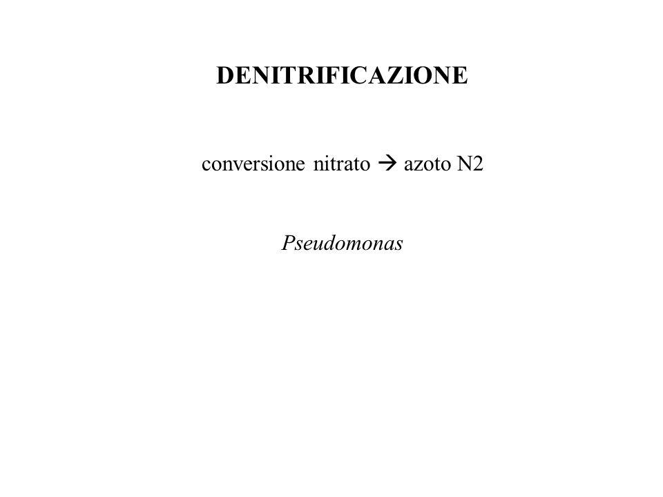 DENITRIFICAZIONE conversione nitrato  azoto N2 Pseudomonas