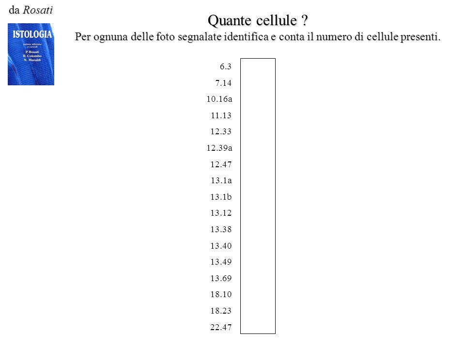 da Rosati Quante cellule ? Per ognuna delle foto segnalate identifica e conta il numero di cellule presenti. 6.3 7.14 10.16a 11.13 12.33 12.39a 12.47