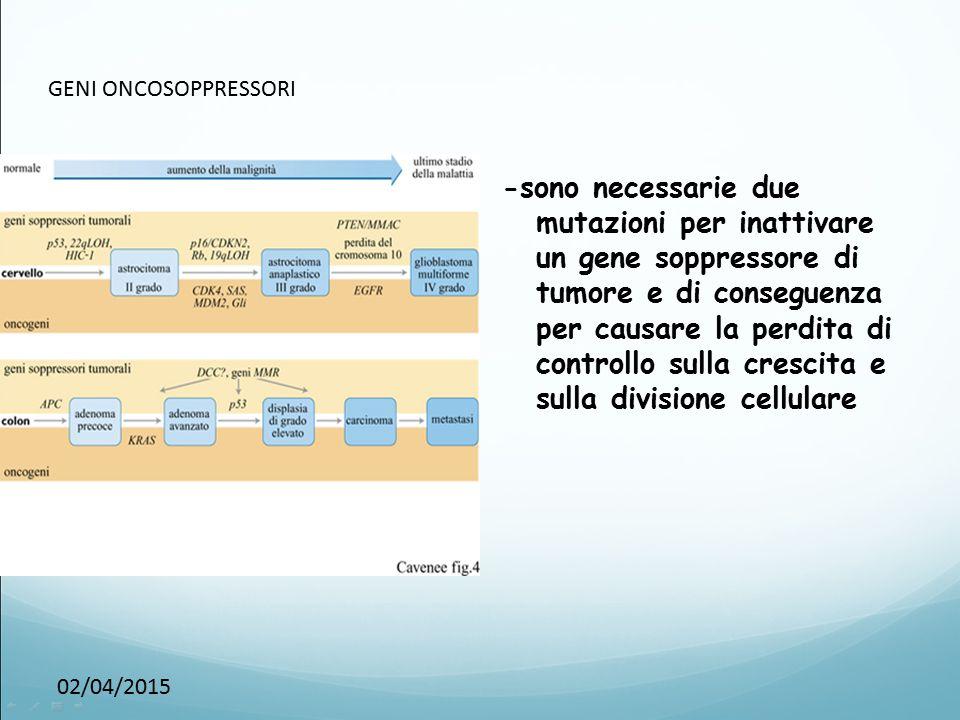 02/04/2015 GENI ONCOSOPPRESSORI -sono necessarie due mutazioni per inattivare un gene soppressore di tumore e di conseguenza per causare la perdita di