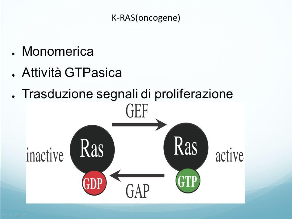 K-RAS(oncogene) ● Monomerica ● Attività GTPasica ● Trasduzione segnali di proliferazione