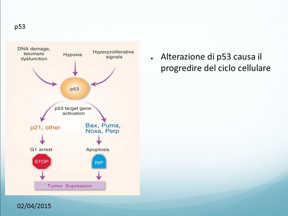 02/04/2015 p53 ● Alterazione di p53 causa il progredire del ciclo cellulare