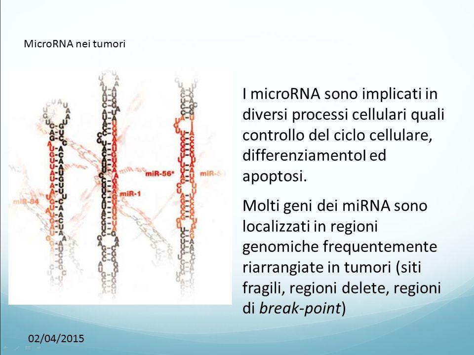 02/04/2015 MicroRNA nei tumori I microRNA sono implicati in diversi processi cellulari quali controllo del ciclo cellulare, differenziamentoI ed apopt
