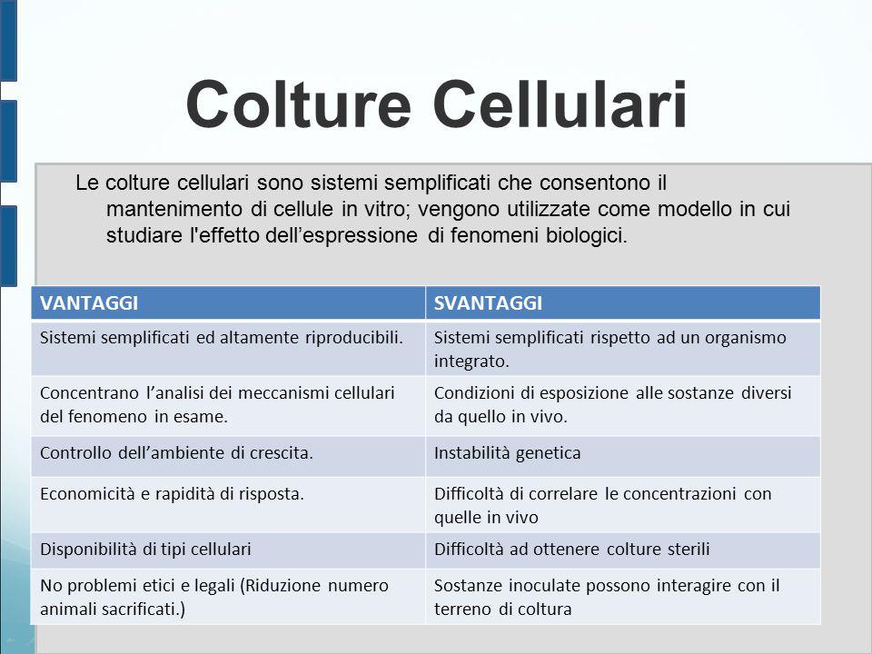 Colture Cellulari Le colture cellulari sono sistemi semplificati che consentono il mantenimento di cellule in vitro; vengono utilizzate come modello in cui studiare l effetto dell'espressione di fenomeni biologici.