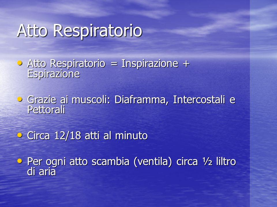 Atto Respiratorio Atto Respiratorio = Inspirazione + Espirazione Atto Respiratorio = Inspirazione + Espirazione Grazie ai muscoli: Diaframma, Intercos