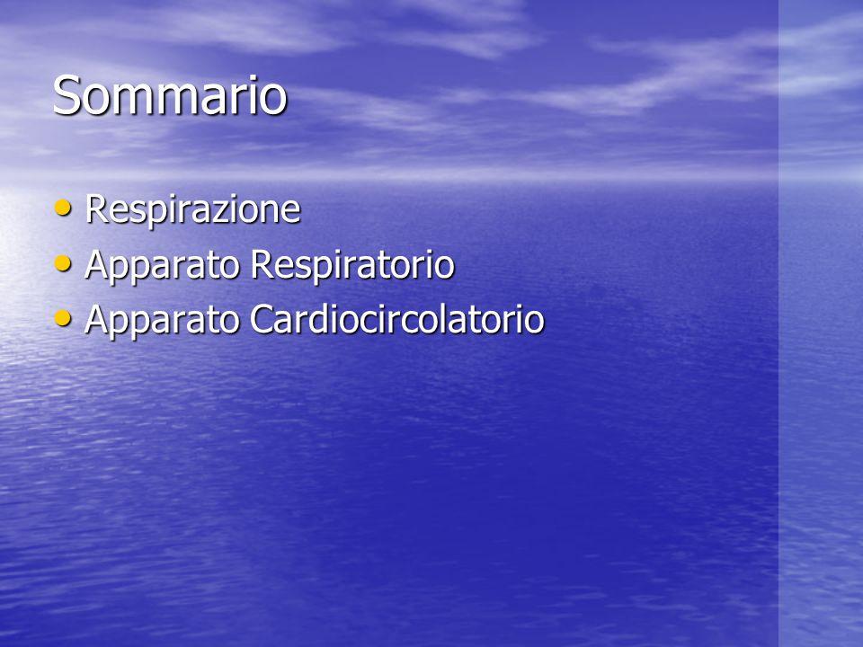 Sommario Respirazione Respirazione Apparato Respiratorio Apparato Respiratorio Apparato Cardiocircolatorio Apparato Cardiocircolatorio