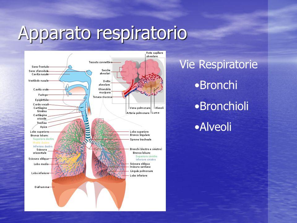 Negli alveoli avviene lo scambio gassoso Negli alveoli avviene lo scambio gassoso Durante l'immersione respiriamo aria a pressione ambiente Durante l'immersione respiriamo aria a pressione ambiente Scambio Gassoso Dalton Henry