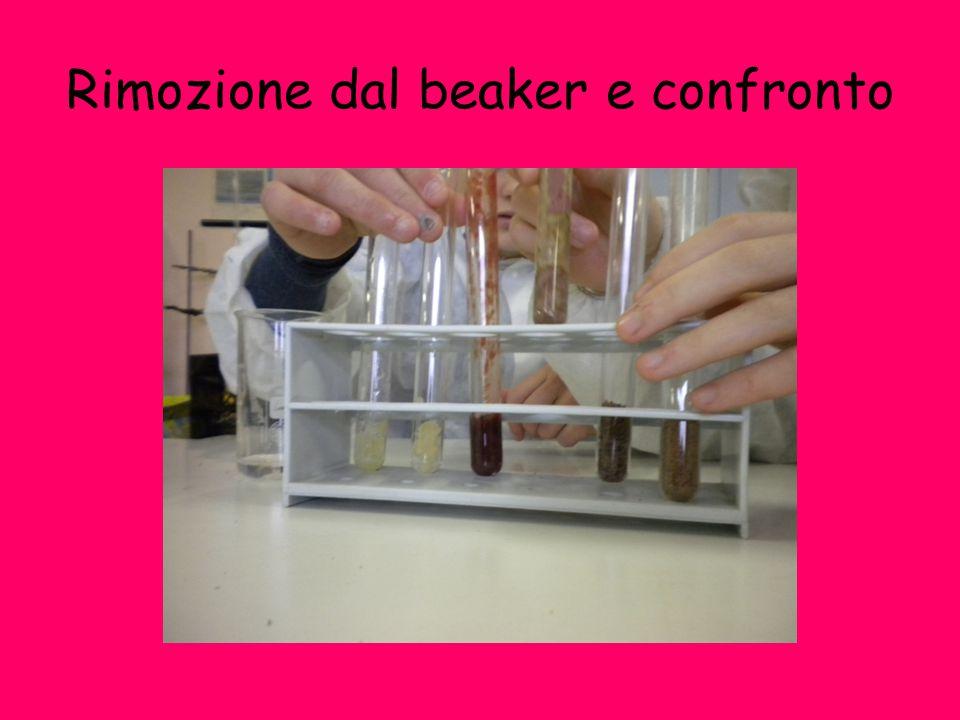 Rimozione dal beaker e confronto