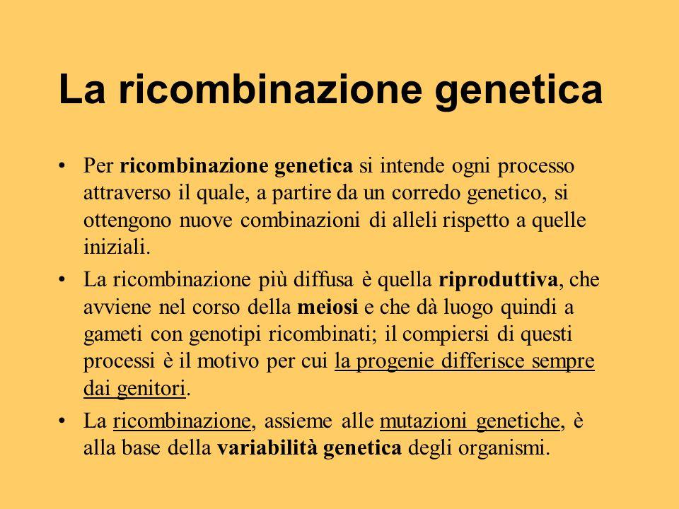 La ricombinazione genetica Per ricombinazione genetica si intende ogni processo attraverso il quale, a partire da un corredo genetico, si ottengono nu