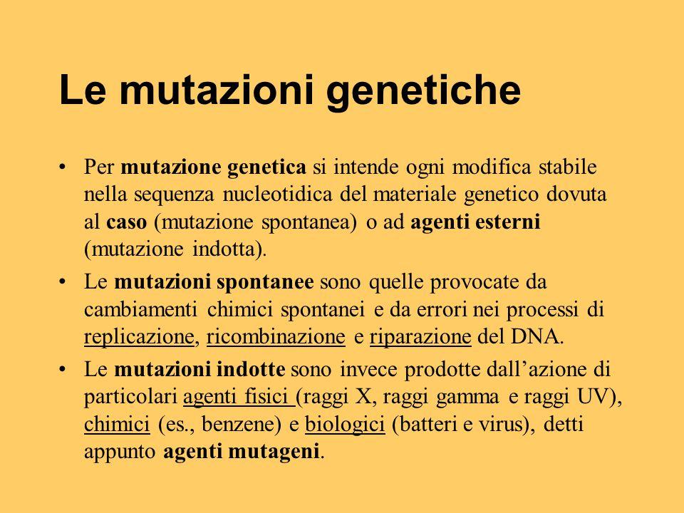 Le mutazioni genetiche Per mutazione genetica si intende ogni modifica stabile nella sequenza nucleotidica del materiale genetico dovuta al caso (muta