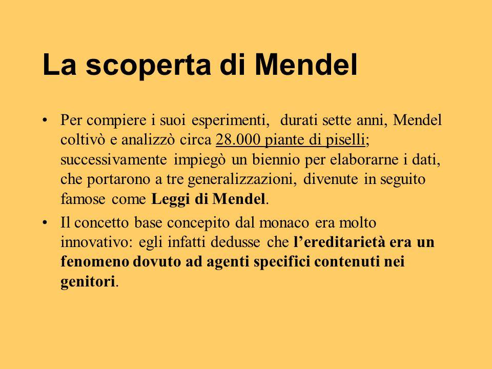 La scoperta di Mendel Per compiere i suoi esperimenti, durati sette anni, Mendel coltivò e analizzò circa 28.000 piante di piselli; successivamente im