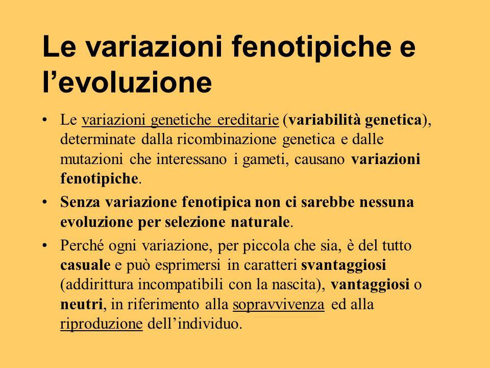 Le variazioni fenotipiche e l'evoluzione Le variazioni genetiche ereditarie (variabilità genetica), determinate dalla ricombinazione genetica e dalle