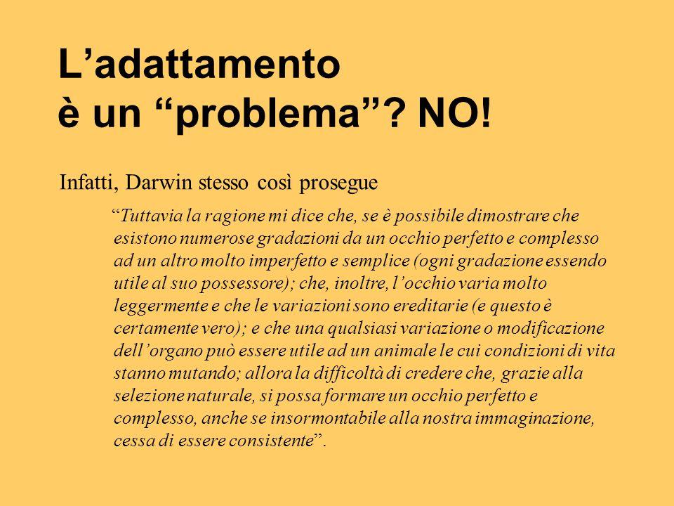 """L'adattamento è un """"problema""""? NO! Infatti, Darwin stesso così prosegue """"Tuttavia la ragione mi dice che, se è possibile dimostrare che esistono numer"""