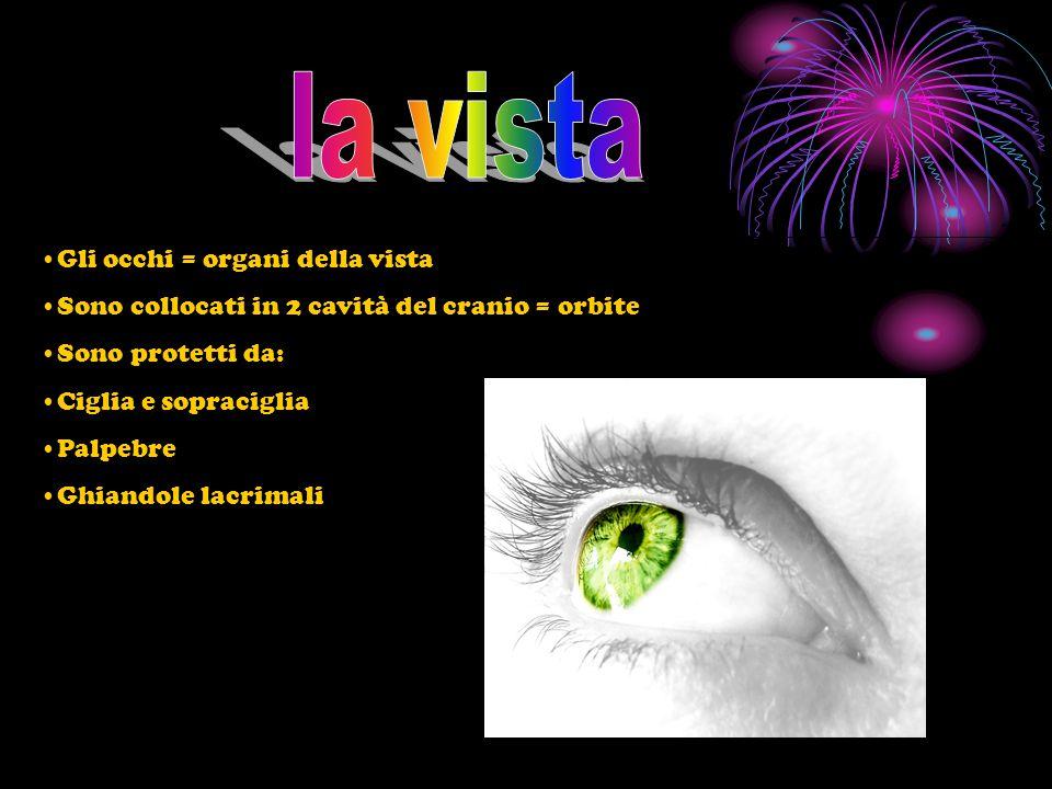 I raggi luminosi attraversano la cornea ( membrana trasparente che attraversa l'occhio) Entrano nell'occhio attraversano la pupilla ( foro centrale dell'occhio) Intorno alla pupilla c'è l'iride (anello variamente colorato con i muscoli che fanno dilatare o restringere la pupilla) La luce attraversa il cristallino (si trova dietro la pupilla, funziona come una lente che proietta le immagini sulla retina, arrivano capovolte e rimpicciolite La retina attraverso il nervo ottico invia l'immagine al cervello sotto forma di impulsi nervosi, i neuroni li elaborano e ricompongono l'immagine reale