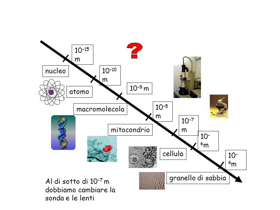 nucleo 10 -15 m atomo 10 -10 m macromolecola 10 -9 m 10 -8 m mitocondrio cellula 10 -7 m 10 - 6 m granello di sabbia 10 - 4 m Al di sotto di 10 -7 m d