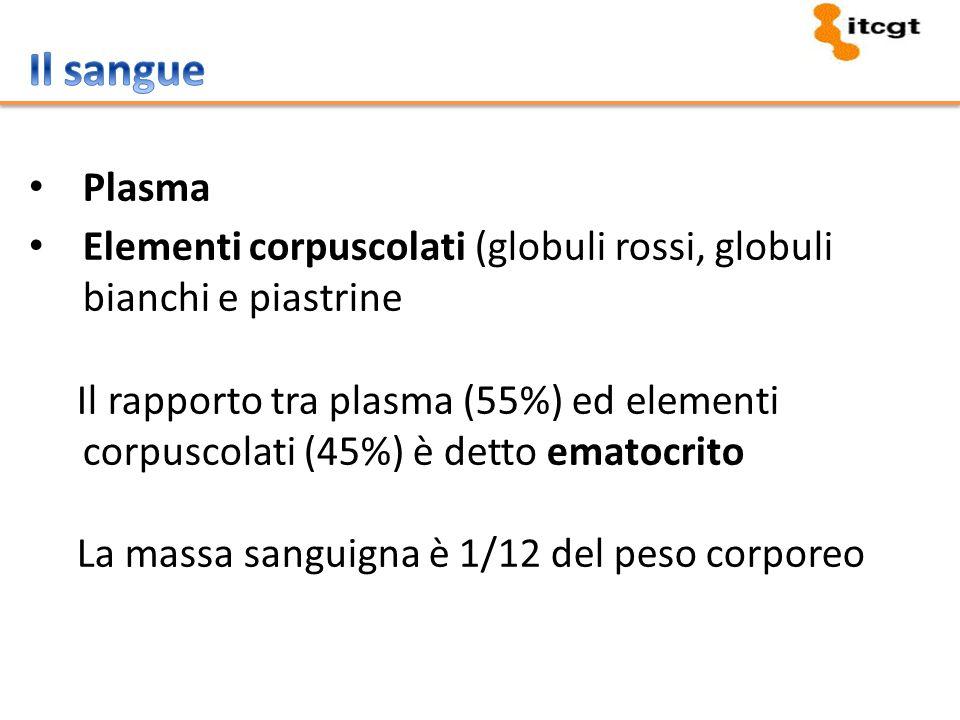 Plasma Elementi corpuscolati (globuli rossi, globuli bianchi e piastrine Il rapporto tra plasma (55%) ed elementi corpuscolati (45%) è detto ematocrit